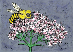 Honey Bee and Valerian Print