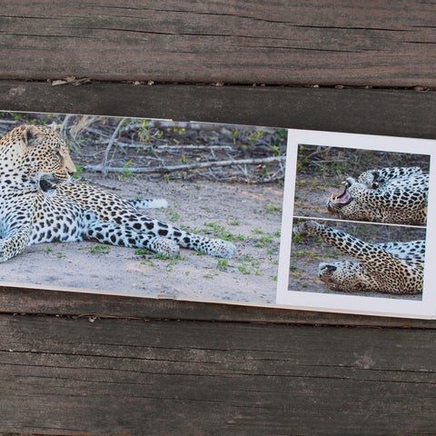 An open Luminta Photobook with 3 pictures of a leopard