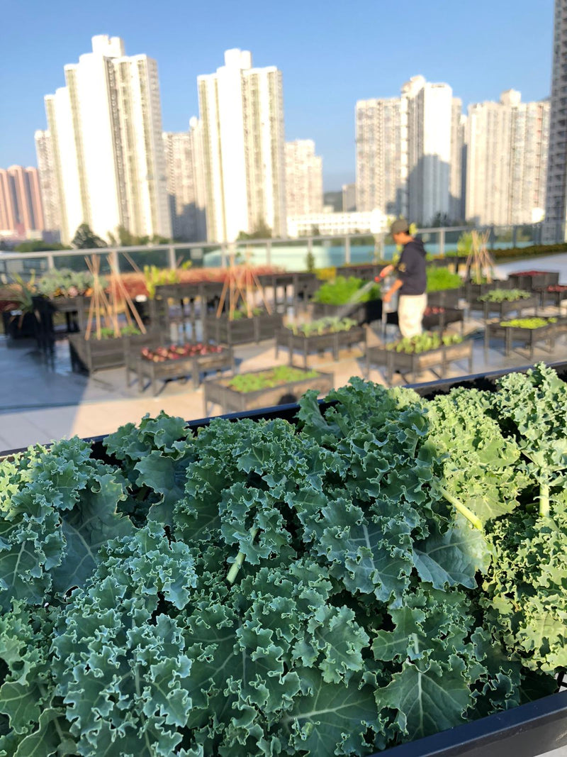 KIRRLiving: Benefits of Urban Farming by Agnes Yeung