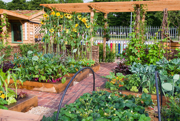Here are some of the most common gardening mistakes