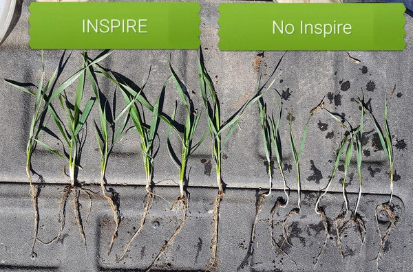 FIELD RESULTS:  Inspire Seed Starter to Maximize Crop Yields