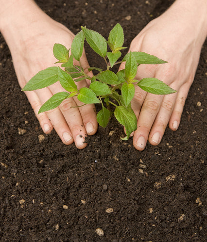 SOIL HEALTH - SUSTAINABLE AGRICULTURE