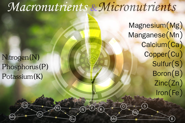 Micronutrients Utilized in our Plant Products to Maximize their Potential