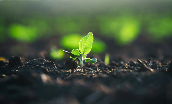 Humic Products and How they Benefit Soil and Plant Health