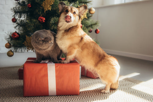 Cat and dog with Christmas present
