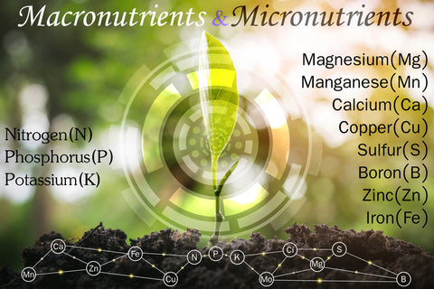 Macronutrients Required For Plant Growth Earth Smart Solutions Environmental Solutions Provider