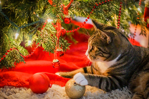 Cat playing with Christmas tree decorations