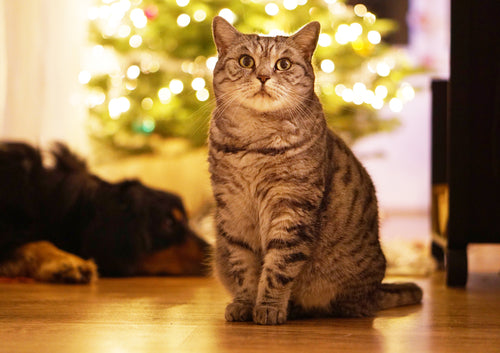 Cat and dog by Christmas Tree
