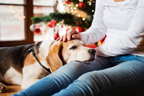 Woman petting dog by Christmas tree