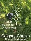 Defender - Plant Protector & Soil Conditioner