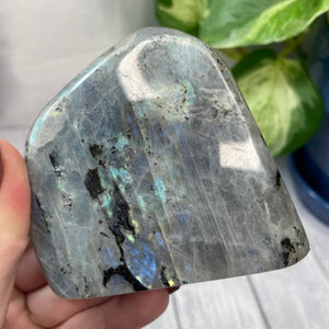 "Multicolor Labradorite Freeform ""G"""