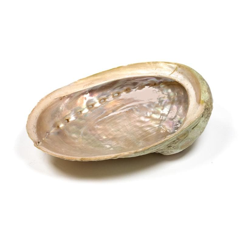Abalone Smudge Shell Haliotis - Health Matters