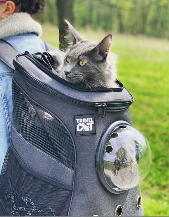 Cat Backpack for Larger Cats