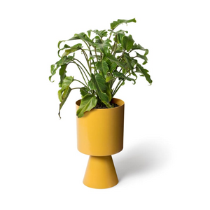 Palm Springs Planter Medium | Tumeric