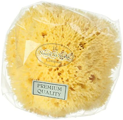 Hydrea - Honeycomb Sea Sponge in Gift Box Med Origin 5.5""