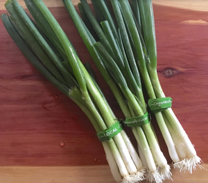 Scallion Bunches - Wednesday 4/14