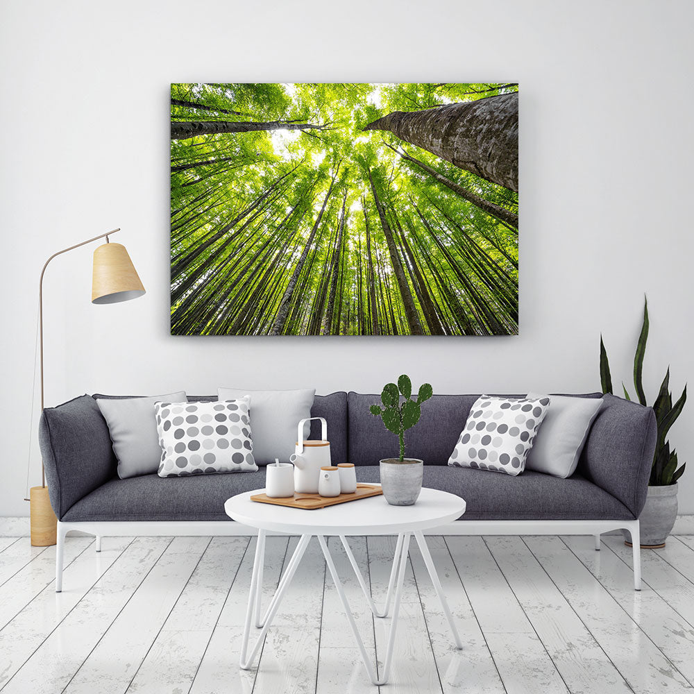 Big Beech Trees Nature Canvas Wall Art