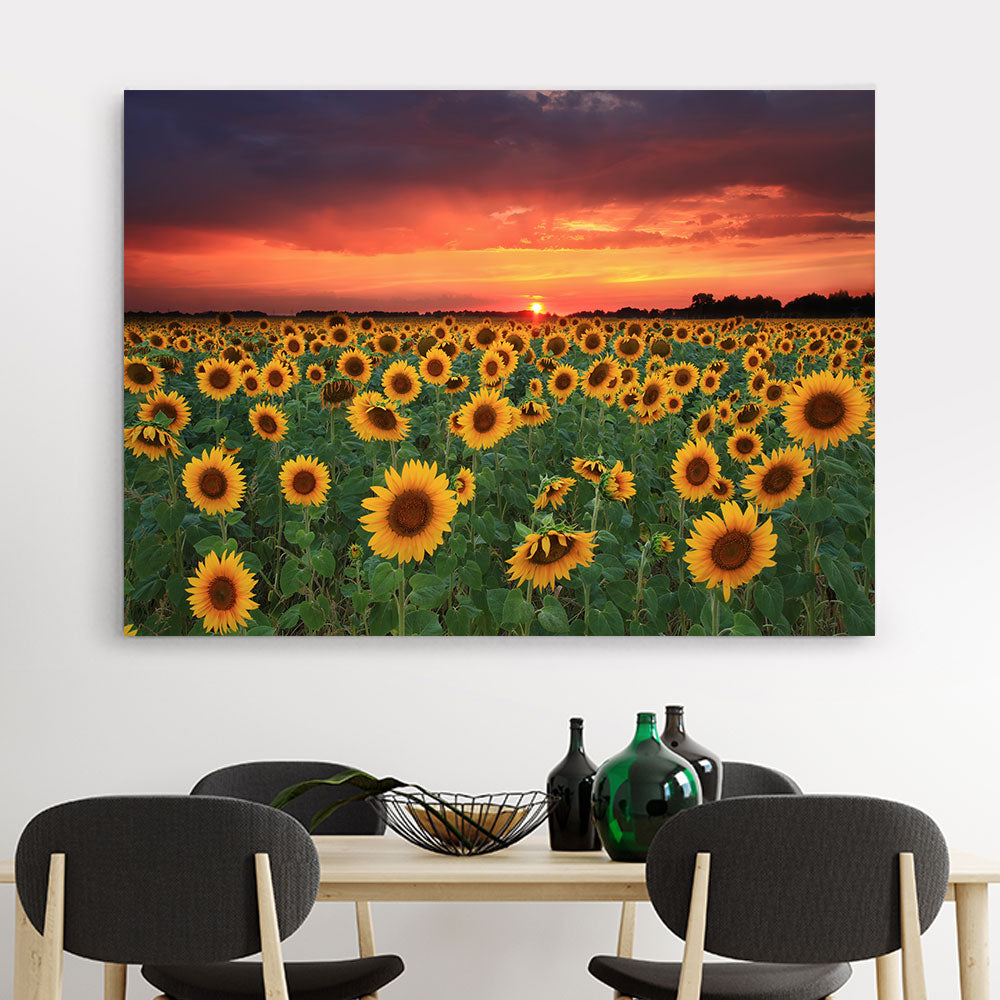 Field of Sunflowers Sunset Flower Canvas Wall Art