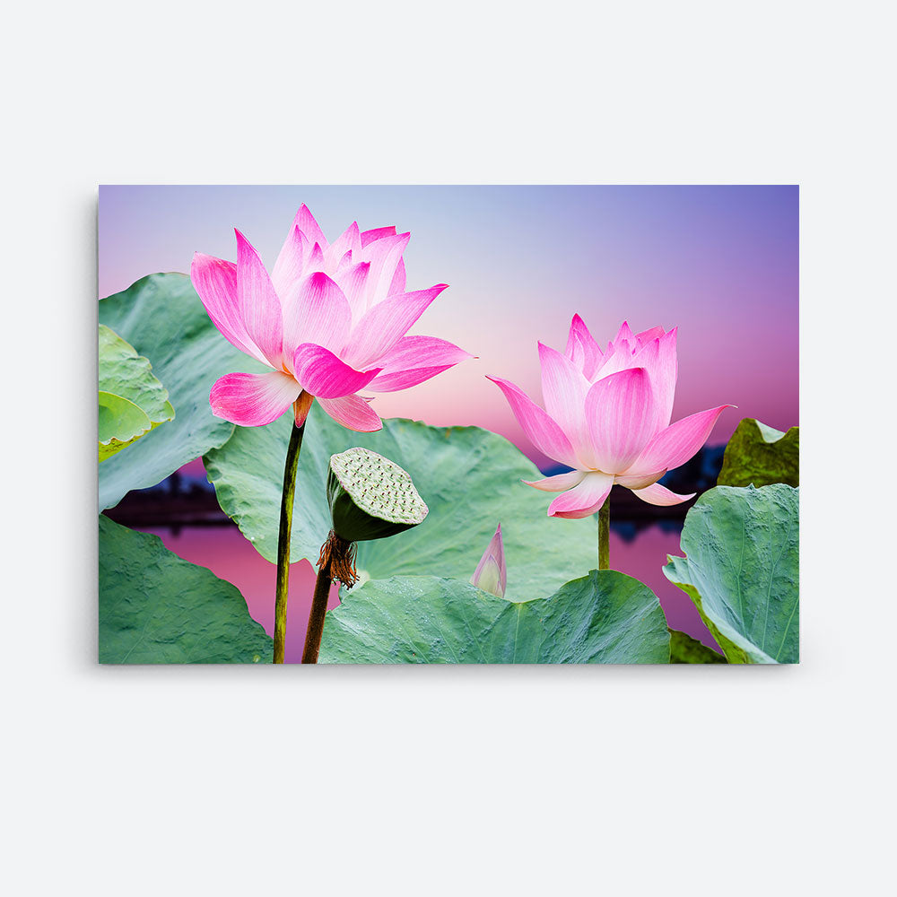 Pink Lotus Flower Canvas Wall Art