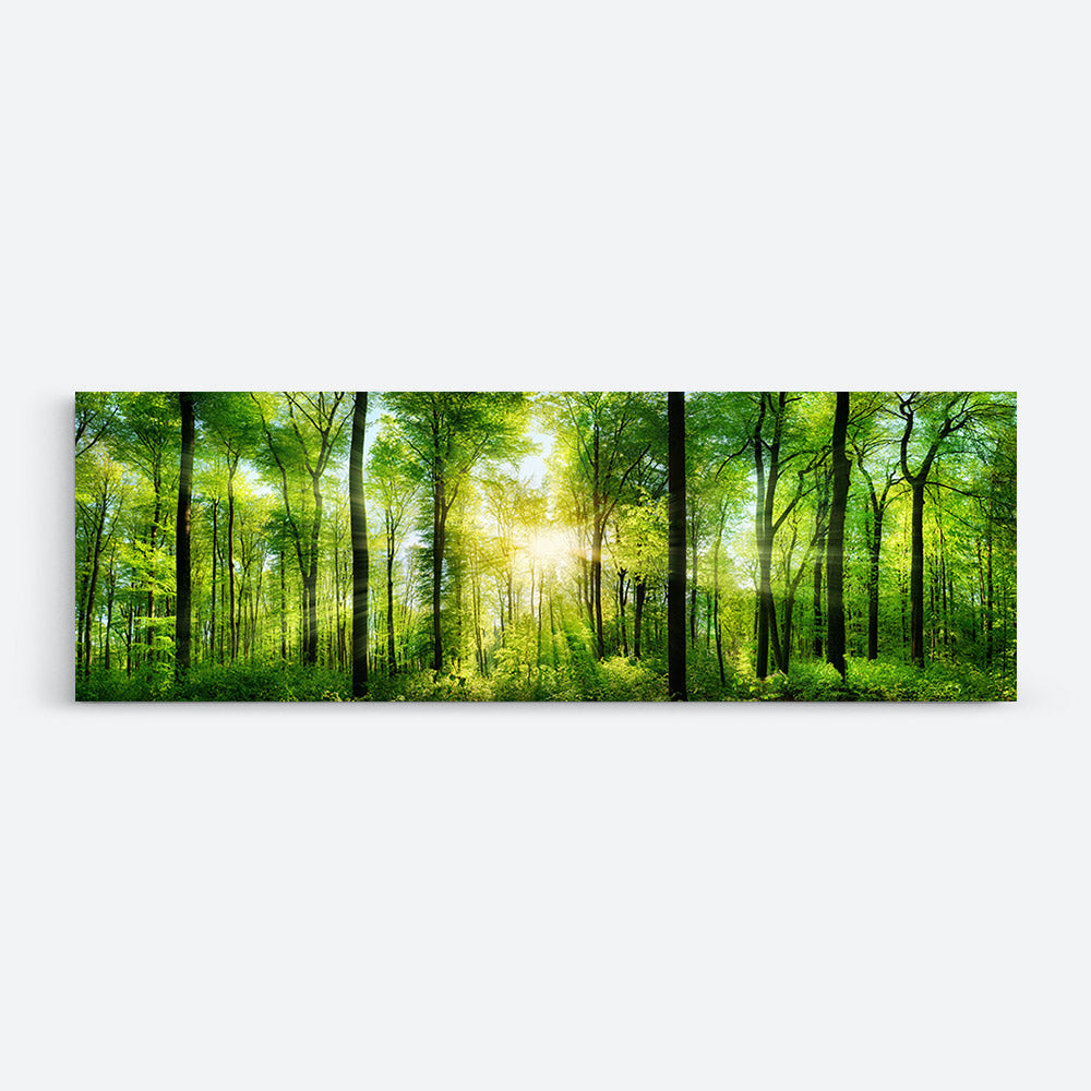 Panorama Forest Trees and Sun Canvas Wall Art