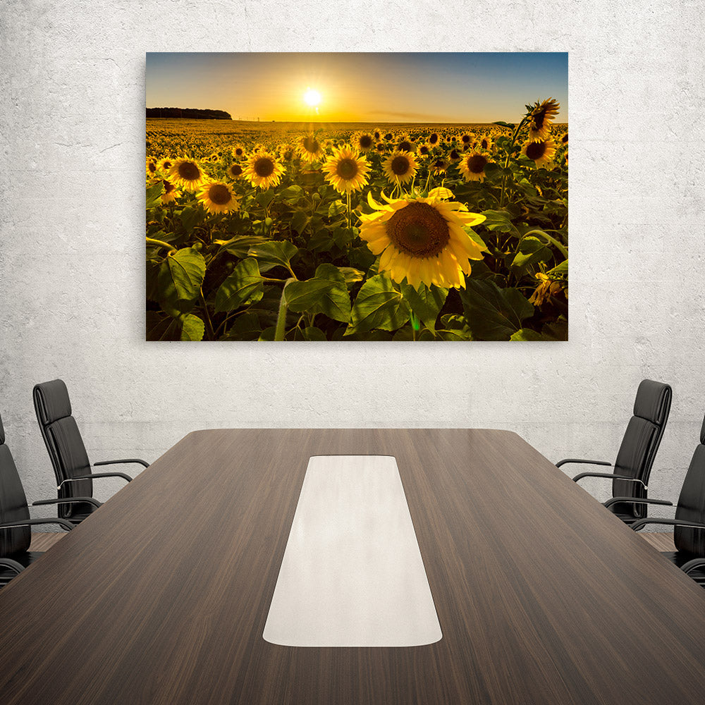 Sunflowers at Sunset Canvas Wall Art