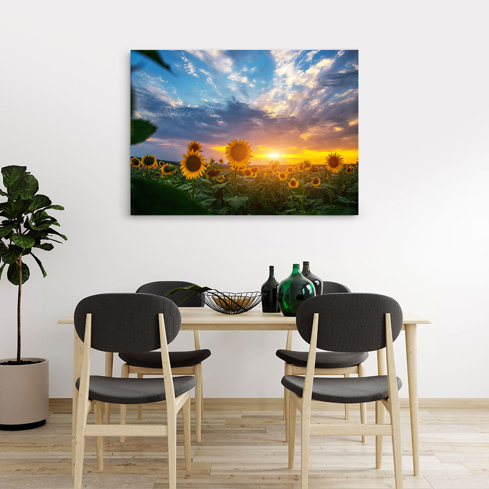 Sunset in Sunflowers Field Canvas Wall Art