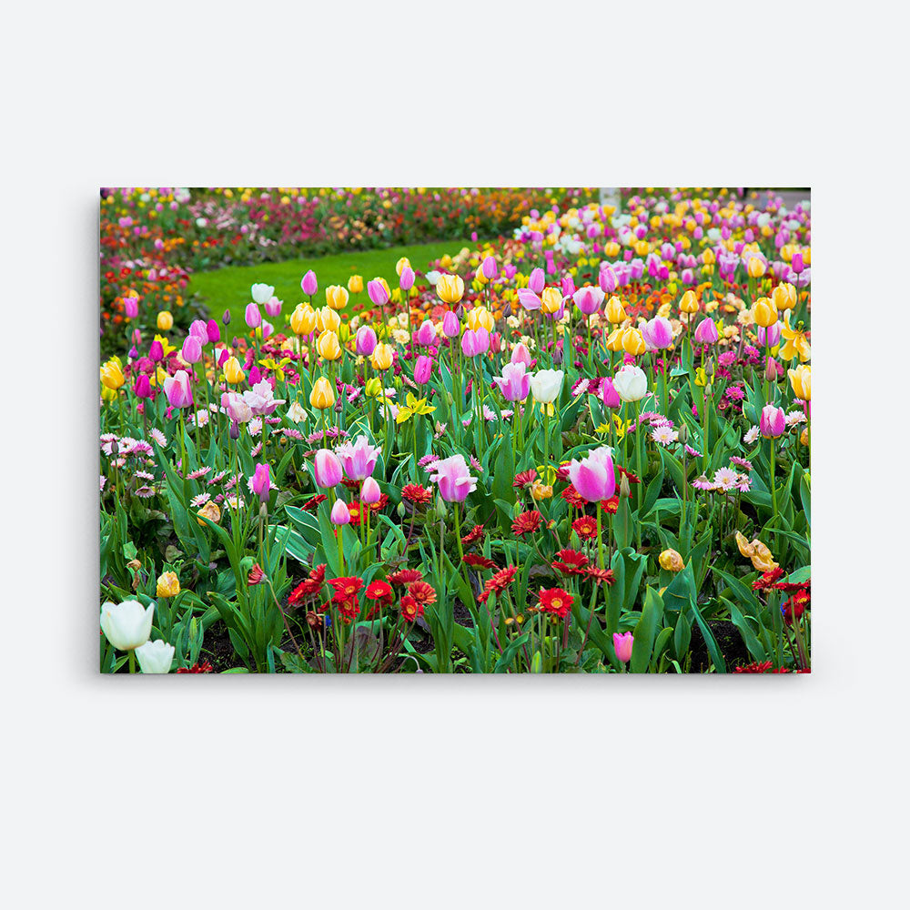 Tulip Flowers Canvas Wall Art v2