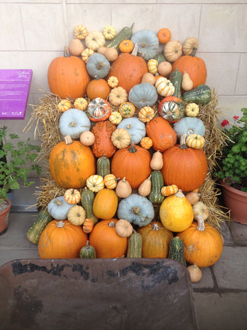 Pumpkin display for harvest festival and Halloween.Orange, yellows squash, pumpkins.