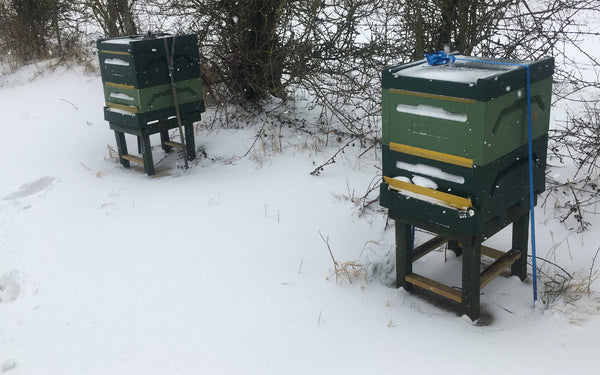 "Bee Good hives in March under 3"" of snow"