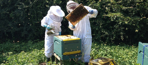 Beekeepers working bees