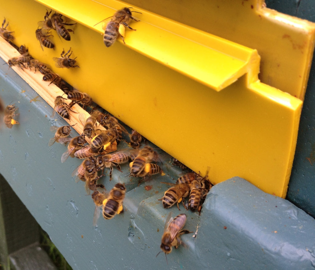 Bee Good Honeybees at the hive entrance in Spring