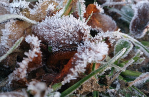 February frost on the forest floor