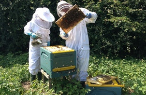Inspecting a hive in the Bee Good apiary