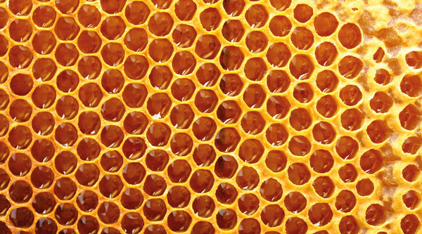 Beeswax comb full of honey prior to being capped