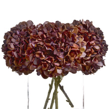 Load image into Gallery viewer, Coffee Head Hydrangea