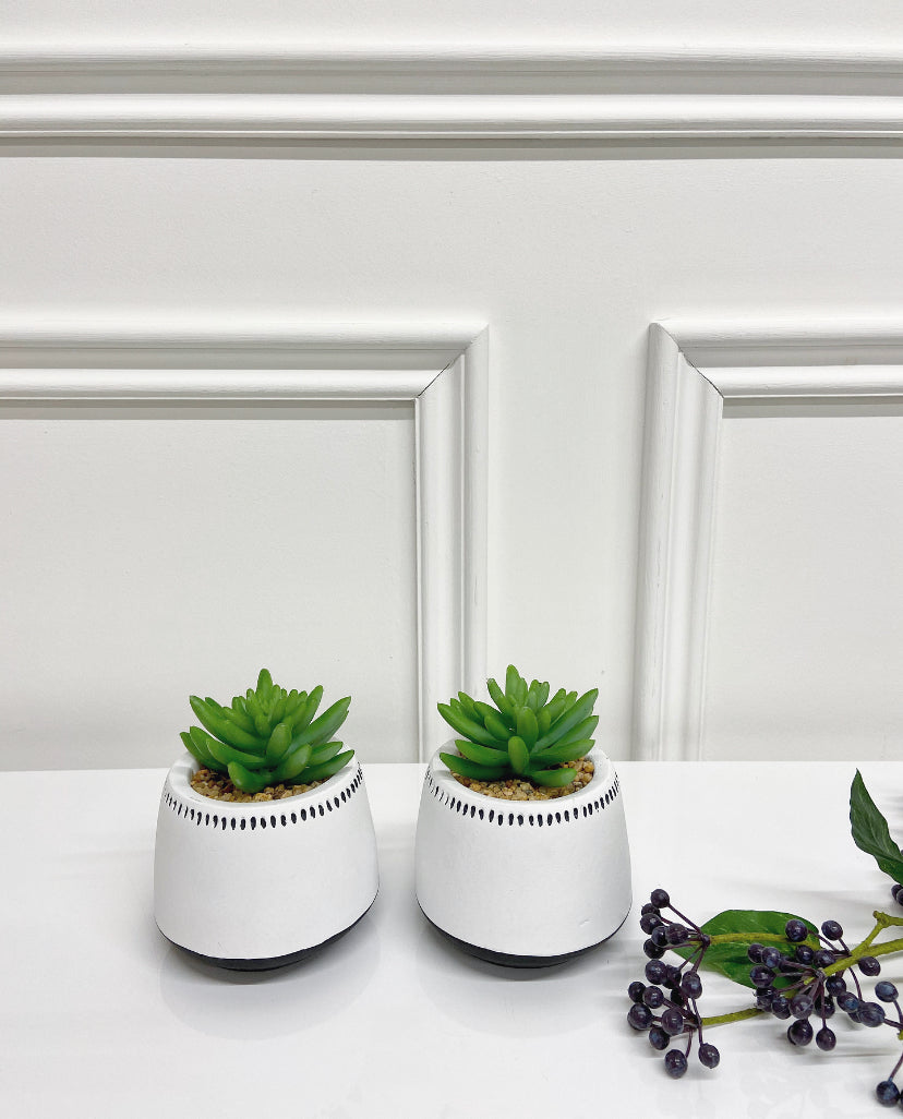 Set of Succulents in White Dotted Pot