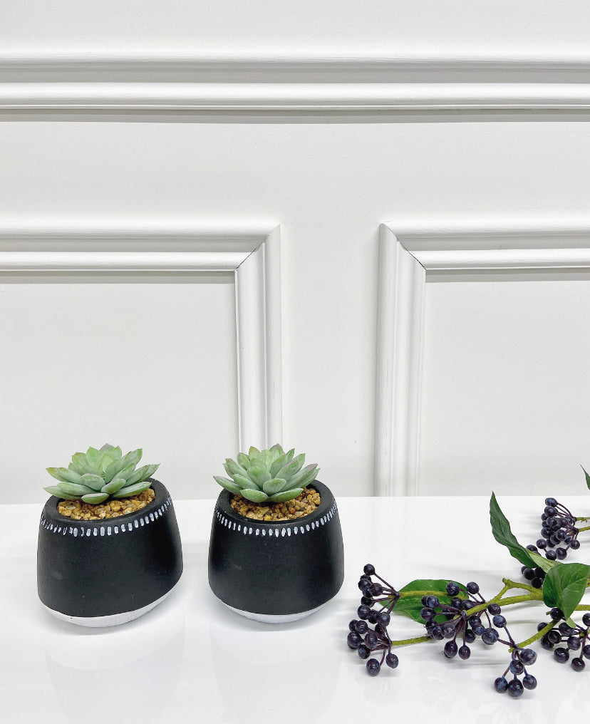 Set of Succulents in Black Dotted Pot