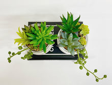 Load image into Gallery viewer, Set of Mixed Succulents
