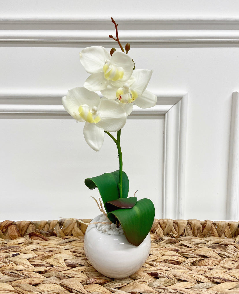 White Orchid in Oval Pot