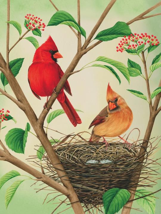 Northern Cardinals 500 Piece Puzzle | Davis Cards & Games