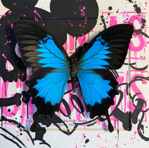 Born As Ghosts Blue Emperor Butterfly Original