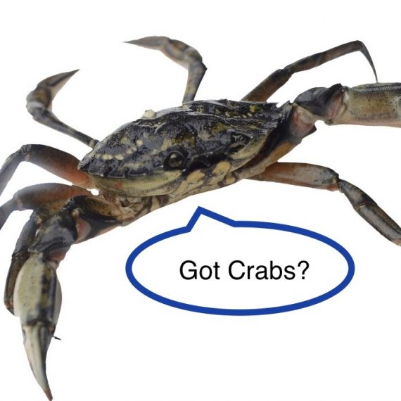Day 14 - got crabs???