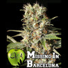 MISSING in Barcelona (M.I.B)