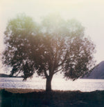 Load image into Gallery viewer, Arbre en bord de mer sur Patmos