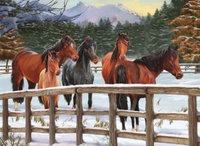 Horse Diy Paint By Numbers Kits VM51407
