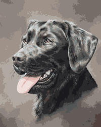 Black Dog Diy Paint By Numbers Kits WM-1593
