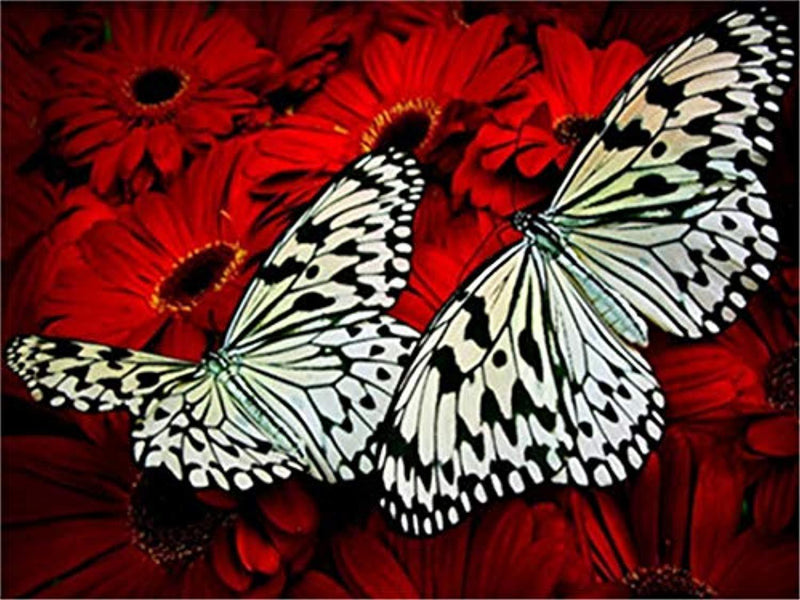 Butterfly Diy Paint by Numbers Kits DIY PBN96419
