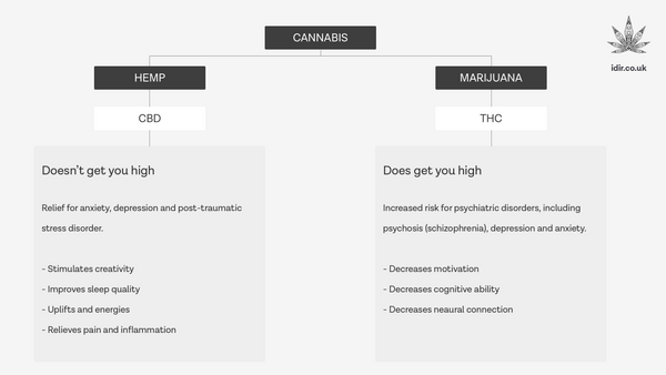 The difference between HEMP CBD and MARIJUANA THC