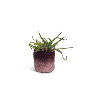 Flower Pot Small - Aubergine Two-Tone