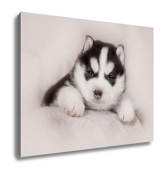 Gallery Wrapped Canvas, Cute Siberian Husky Puppy